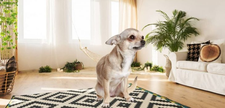Why Do Dogs Rub Their Butts On The Carpet - The Definitive Guide